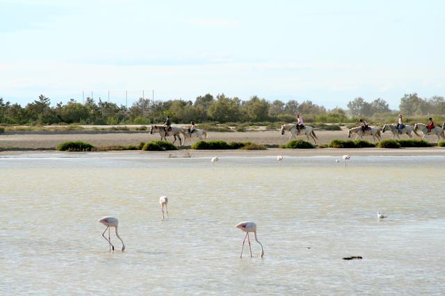 画像: カマルグは南フランスの湿地帯で、良質な海塩が生産されていることで知られる。
