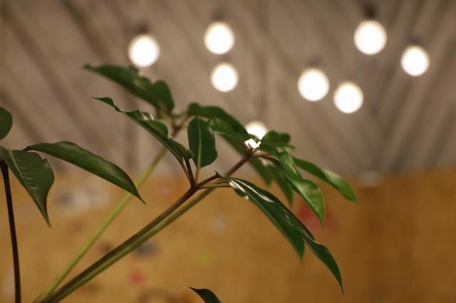 画像11: 「ミニは自分を奮い立たせる存在」株式会社LOOP 代表 野村さん