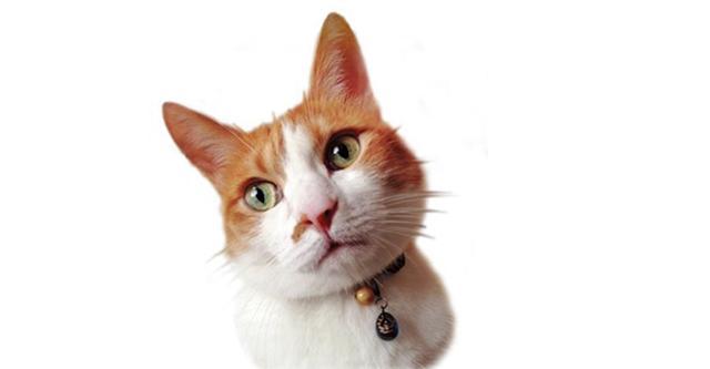 画像: 愛猫は13歳の雄猫・ボリス。幼い頃から動物とともにいることが多かったヒグチ。作品や絵本の重要なモチーフとしても登場する。まさに創作の源となる存在。 COURTESY OF THE ARTIST ©️HIGUCHI YUKO