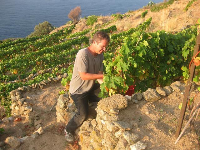 画像: イタリア、ティレニア海に浮かぶジリオ島の自家ブドウ畑で。土着品種や古木の畑に対するクラーツ氏の思いは深い COURTESY OF BIBI GRAETZ