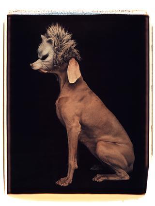 『Wolf』1994年
