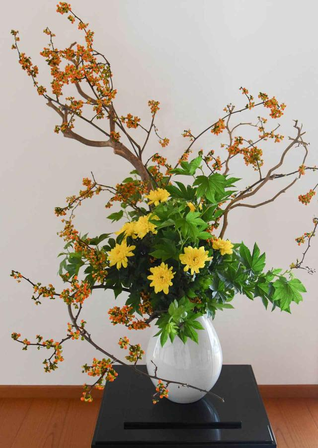 画像: 同じ菊の花を使いながら、さまざまな趣向で違った美しさを見せてくれる生け花。協力した流派は、遠州、華道本能寺、桑原専慶流、専慶流、都未生流