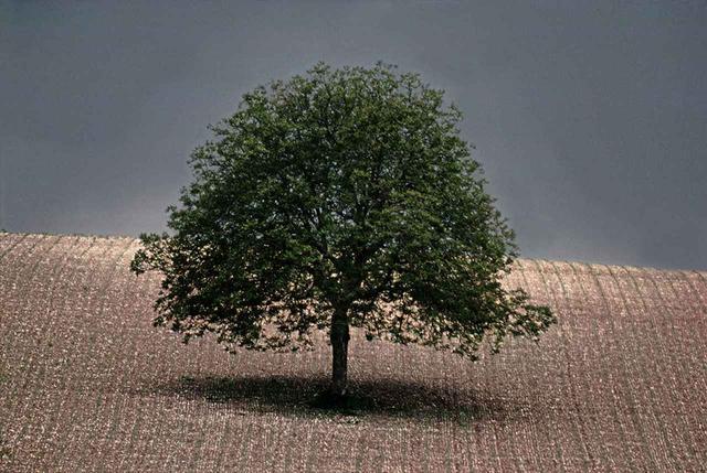 画像: WALNUT TREE,1976, DORDOGNE, FRANCE © FRANK HORVAT