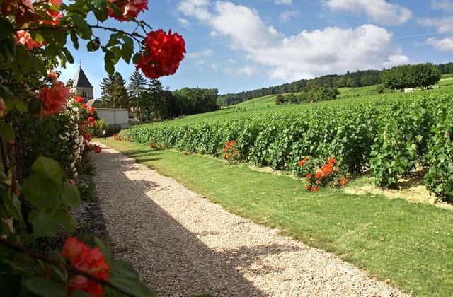 画像: コート・デ・ブラン地区、メニル・シュル・オジェ村にあるサロンの自社ブドウ畑 COPYRIGHT SERGE CHAPUIS