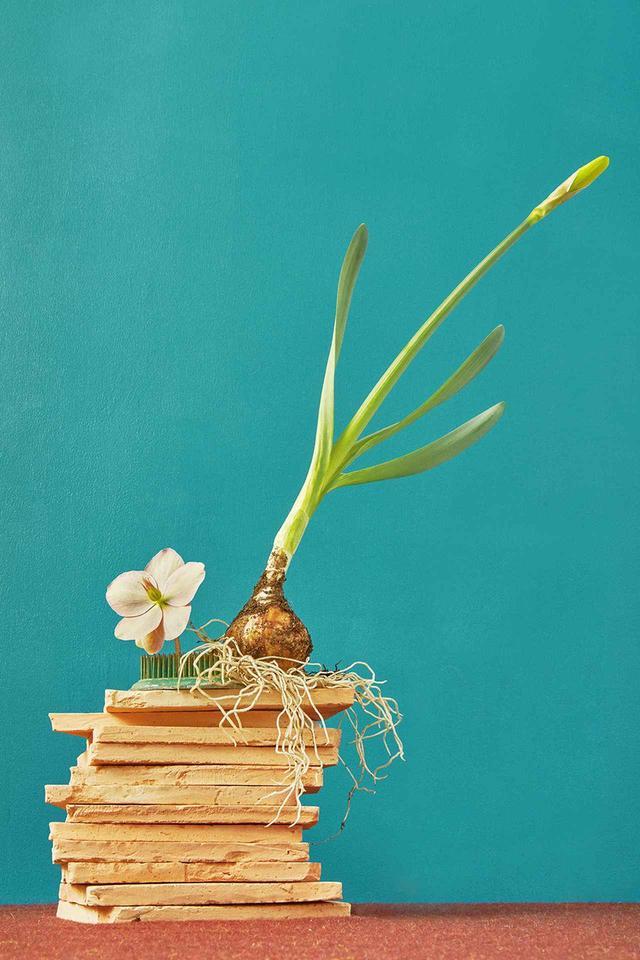 画像: あくまでワイルドに 新しいタイプのフラワーデザイナーによるアレンジメント。大量生産された花を使わず、クリスマスローズの「ピンクフロスト」やスイセンの球根など季節の植物をアレンジに用いている FLOWERS BY SAIPUA, STYLED BY MARGARET MACMILLAN JONES