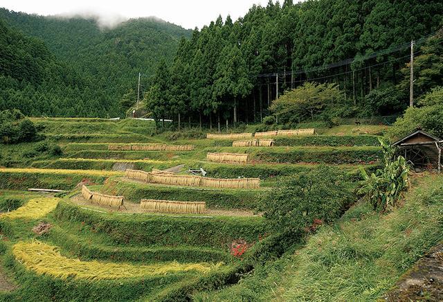 """画像: """"日本の棚田百選""""に選ばれている樫原の集落。 天日に干し熟成した棚田米はRISE & WINではおにぎりで提供。かつての田畑に杉を植林した周辺は、今は森林放棄地"""