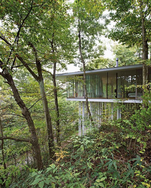 画像: TNAによる「方の家」 アシのように細い支柱は、笹が地面からまっすぐ伸びているさまをイメージさせる。 ガラスのカーテンウォールで覆われた壁のない家にはほとんど仕切りがない