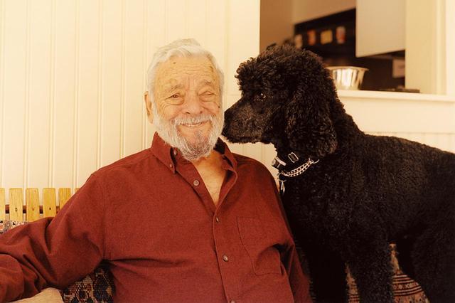 画像: ソンドハイムとウィリー。2匹いる彼のスタンダード・ブラック・プードルの一匹