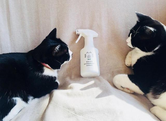 画像: 無臭なので、ビビリのわが家の猫たちもフレンドリー