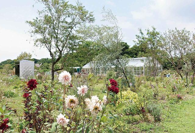 画像: ベネッセアートサイト直島の犬島のプロジェクトは、妹島事務所が手がけている。最新作は、ガーデナーの「明るい部屋」との共同プロジェクトで、長く使われていなかったガラスハウスを再生し、庭園・植物園として蘇らせる「犬島 くらしの植物園」(2016年) © KAZUYO SEJIMA & ASSOCIATES