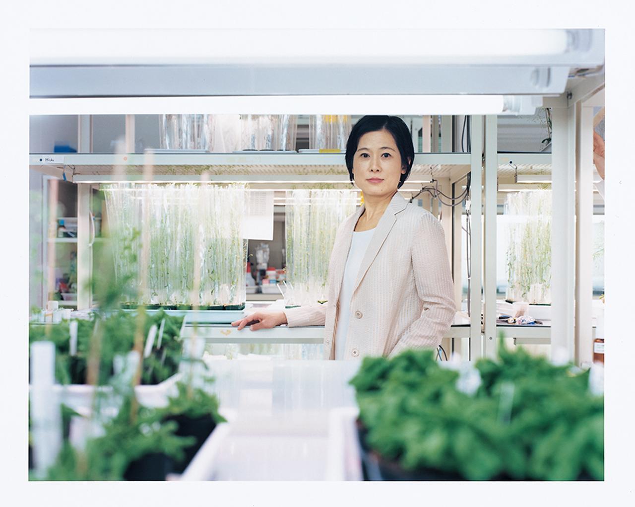Images : 杉本慶子(植物細胞生物学者)