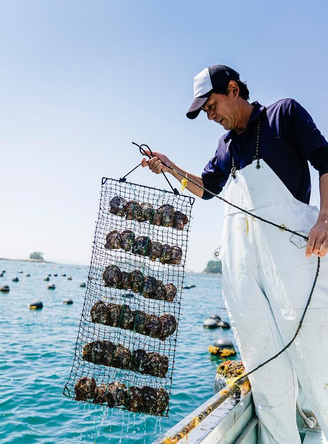 画像: 沖合の海中から、養殖用ネットを引き上げた瞬間