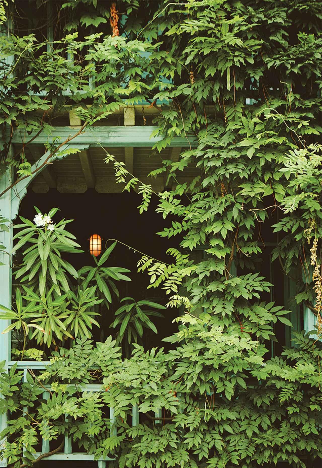 Images : 2番目の画像 - 「ミモザの香りと砂丘に導かれ、 フランスにおけるケープ・コッド カップ・フェレ半島へ」のアルバム - T JAPAN:The New York Times Style Magazine 公式サイト