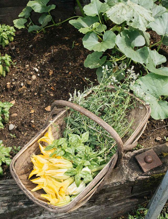 画像: 広大な敷地には2つの菜園があり、ミッソーニのキッチンで使われるズッキーニ、トマト、キュウリ、ルッコラなどの新鮮な野菜が育てられている。朝の散策のあいだ、ニンニクやバジル、ローズマリー、ミントの花などの いい香りが空気に満ちていた
