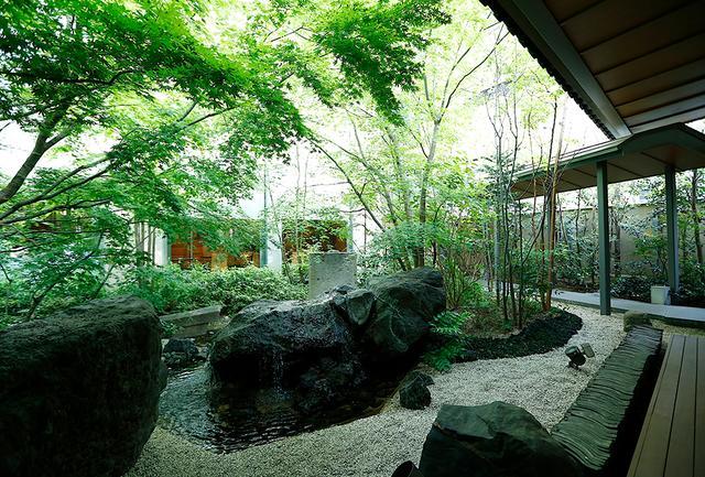 画像: 中庭は緑の小さな森のよう。小鳥もやってくる自然の木々が育つ