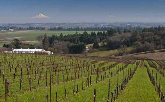 画像: オレゴン州エオラ・アミティ・ヒルズにある「セブン・スプリングス」の畑。ブドウは有機栽培とビオディナミ農法で育てている。「太陽が沈む場所」というだけあり、夕陽が美しい COURTESY OF EVENING LAND VINEYARDS