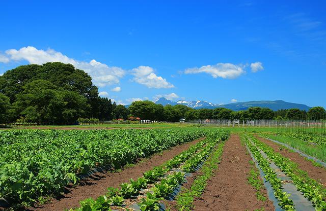 画像: 「東北牧場」内に造られている無農薬・無化学肥料の野菜ファーム