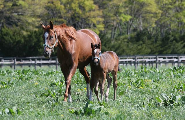 画像: 青森県にある「東北牧場」で伸び伸びと育つ競走馬の親子