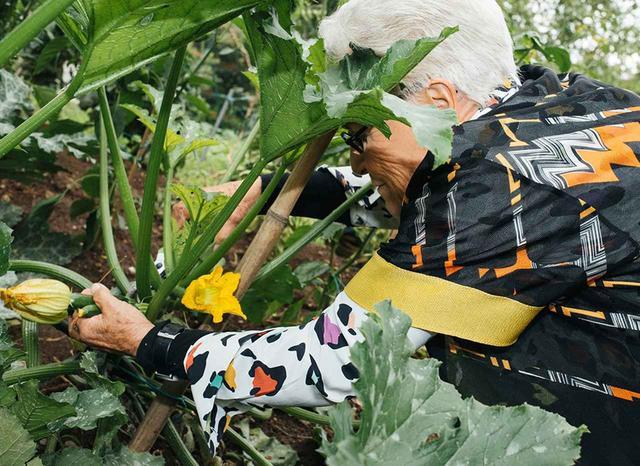 画像: ミッソーニは、その年齢とは思えないほどエネルギッシュで活発だ。スキューバ・ダイビングを愛好する彼女は、延々と広がる庭園を2時間ものあいだ散策しても疲れを見せない。写真は、キッチンに持っていくズッキーニを収穫しているところ