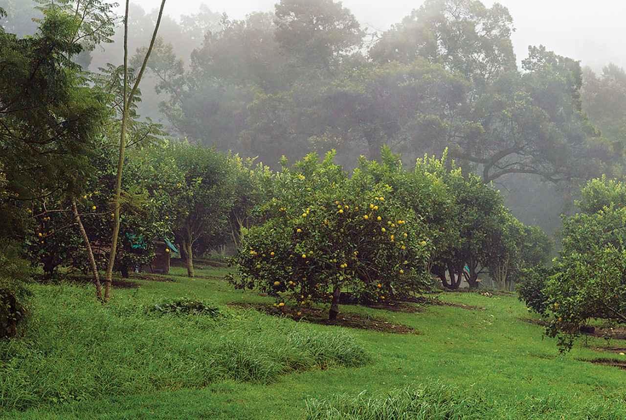Images : 「オオ・ファーム」のレモン畑