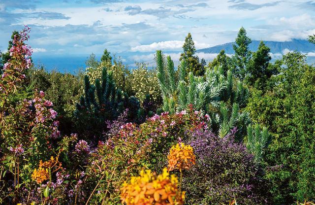 画像: 「クラ・ロッジ」からの眺め。遠くにマアラエア湾が見える