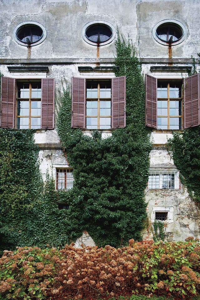 画像: 1500年代初頭に建てられた城の北側の外壁には蔦が生い茂る
