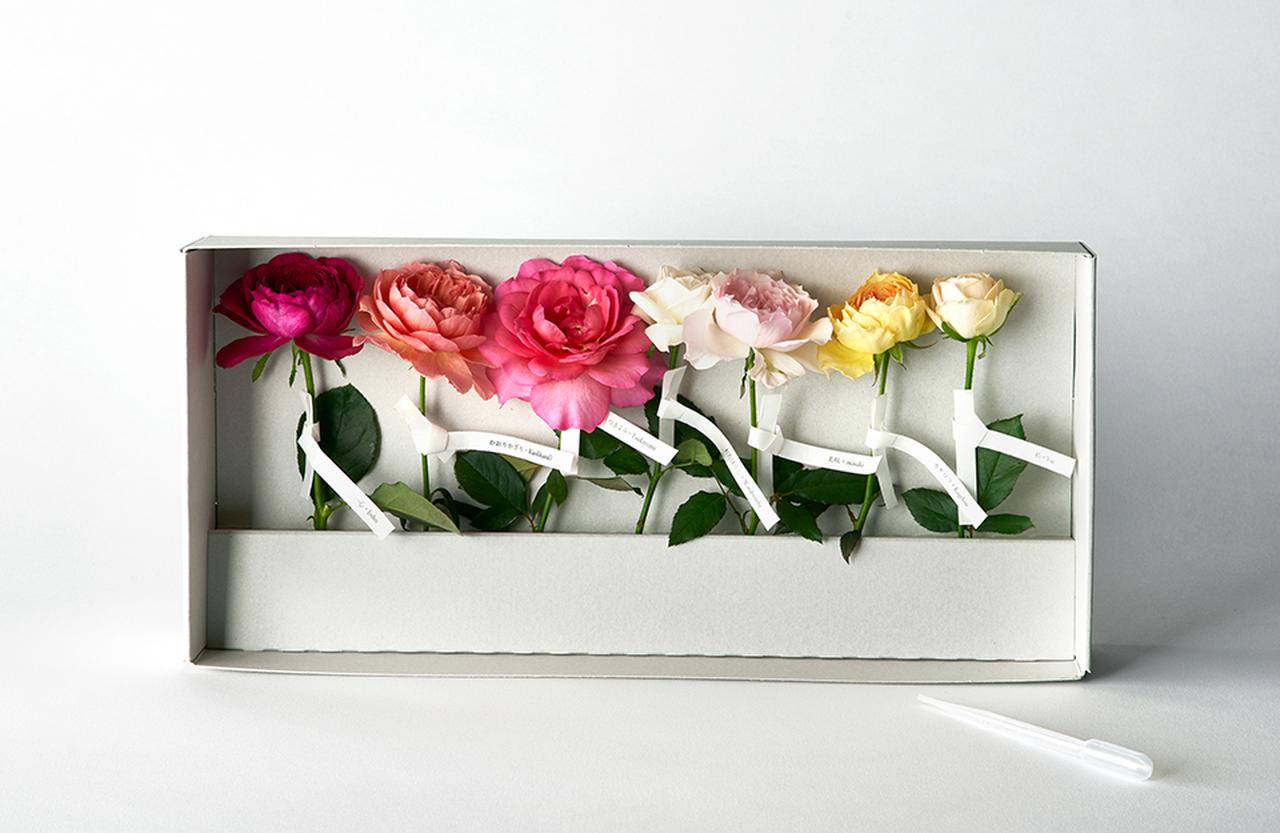 Images : 「わばら標本箱」¥5,000