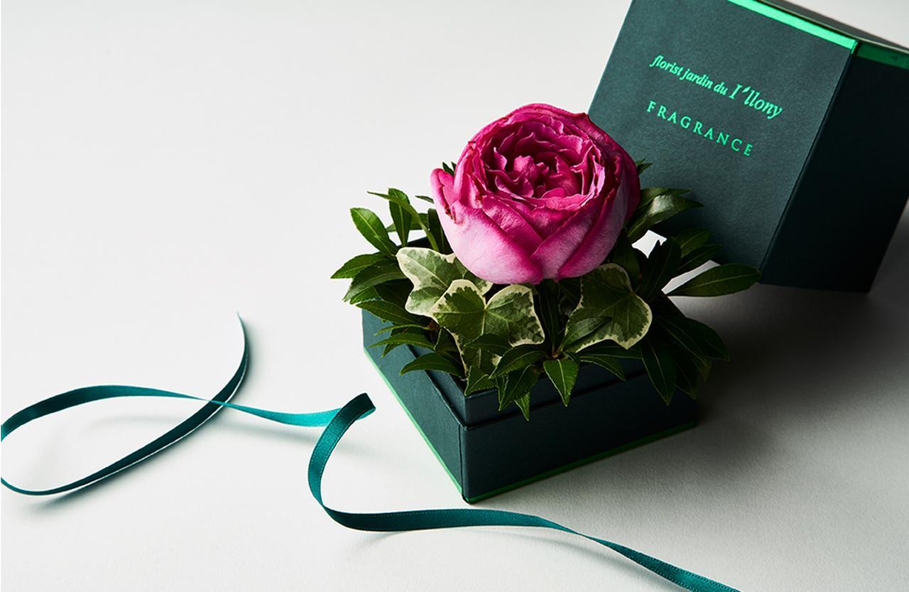 Images : 5番目の画像 - 「Vol.7 ギフトコンシェルジュ真野知子の 贈りものごよみ ― 重陽の節句、 秋バラの開花を告げるもの」のアルバム - T JAPAN:The New York Times Style Magazine 公式サイト