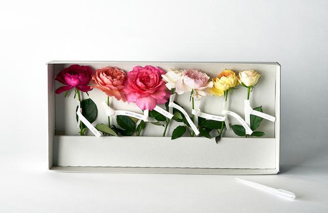 画像: 「わばら標本箱」¥5,000 バラたちを系統、色調など、品種や特性でまとめて標本のようにしたギフトボックス。お互いを引き立てあう 調和の美しさと、それぞれの個性やディテールの妙が楽しめる