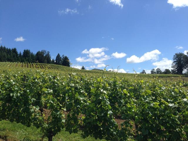 画像: ポートランドから南西約70kmに位置する「レゾナンス」のブドウ畑。オレゴンは近年、世界的に注目を集めるワイン産地。現在、約700軒がオレゴンでワインを生産している