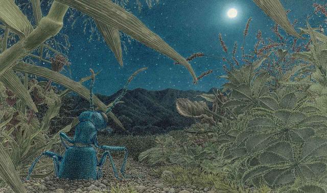 画像: 月夜の晩に成虫となったツチハンミョウが地中から這い出してくる幻想的な絵。『つちはんみょう』より。卵から孵った4,000匹の幼虫のうち、生き残れるのはわずか1~2匹だけ。ほのかな月明かりに浮かぶツチハンミョウの背中には、舘野氏が10年を費やした観察の中で感じた、深い孤独とたくましさが宿る ©2016, HIROSHI TATENO, 'OIL BEETLE' ほかの写真をみる