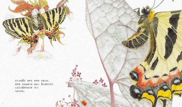 画像: 成虫になったギフチョウ。生涯にわたりアリという天敵に狙われ続け、かろうじて蛹になっても、地べたで休眠中の10カ月のあいだにネズミや鳥に食べられてしまう。春に舞い飛ぶ美しいチョウはほんのひと握りの幸運な者 ©2016, HIROSHI TATENO, 'LUEHDORFIA SWALLOWTAIL' ほかの写真をみる
