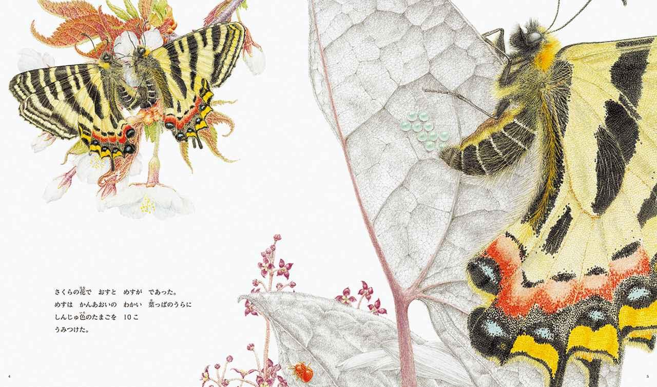 Images : 2番目の画像 - 「福岡伸一 × 舘野 鴻 対談 ー 虫たちの息遣いが聴こえる ー」のアルバム - T JAPAN:The New York Times Style Magazine 公式サイト