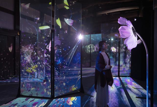 画像: 重要文化財「御台所」で展開されている作品「秋桜と蒲公英(コスモスとタンポポ)」は、約1.5~2mの高さの2種類のコスモス5本と約2.3mのタンポポのオブジェ。作品の前で動くとその面白みはいっそう