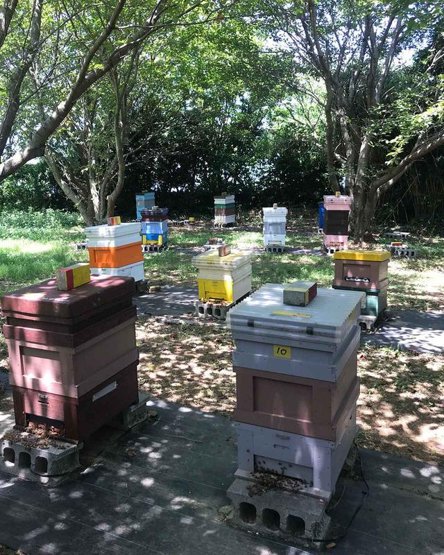 画像: カラフルな色の養蜂箱。ミツバチは色の識別をすることができるとか。ひとつの箱に一匹の女王蜂がいて、1~2万匹のミツバチが暮らす。巣箱は緑豊かな静かな環境に設置される。「ミツバチが生きやすいよう、安心して花の蜜を集め子育てをできるよう、いろいろ工夫します」。長生はニホンミツバチとセイヨウミツバチの2種類を育てている。暑い時期はセイヨウミツバチが、寒い時期にはニホンミツバチが活発に行動するという PHOTOGRAPH BY OGOTO WATANABE