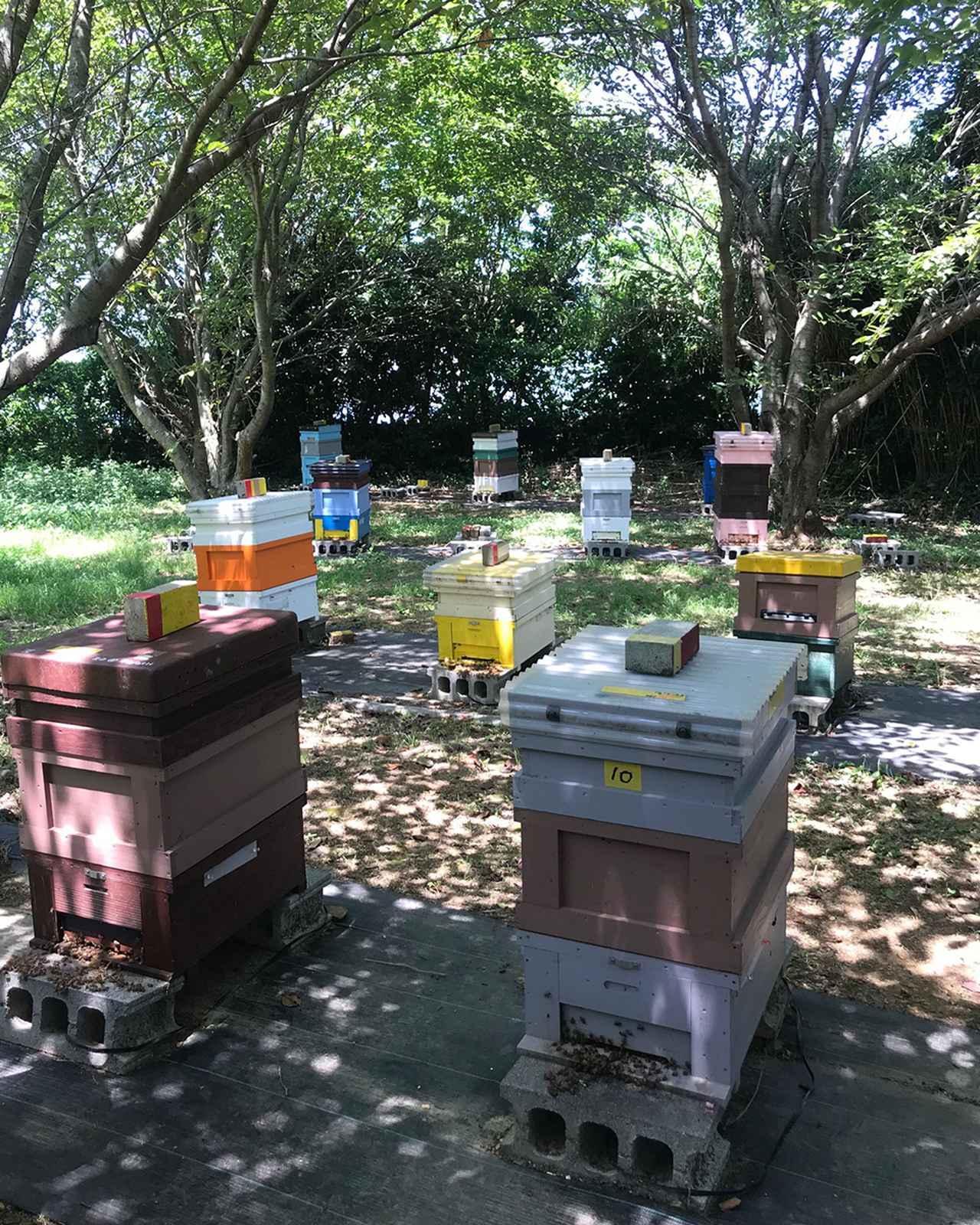 Images : 3番目の画像 - 「「ブリコラージュ」の お皿を作るものと人<Vol.1> ミツバチから地域を元気に―― オーガニック養蜂家の挑戦」のアルバム - T JAPAN:The New York Times Style Magazine 公式サイト
