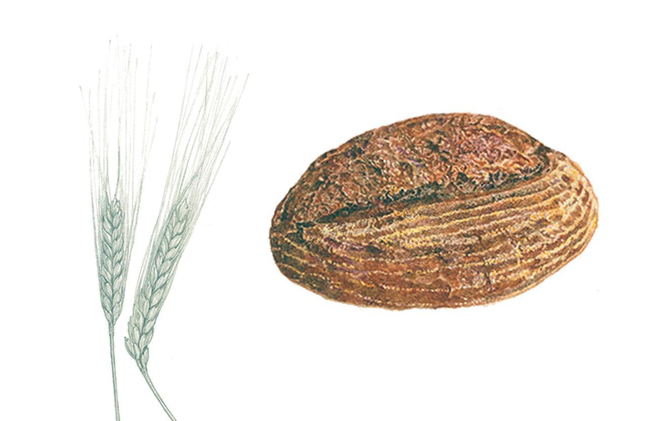 画像: ブリコラージュのお皿を作るもの サスティナブルで高品質な農作物作りに取り組む北海道のアグリシステムが管理する、十勝産の全粒粉小麦やラ イ麦を使用。ディンケル小麦は滋賀県日野町で古代種を栽培する廣瀬敬一郎氏作。昨年は大雨の影響で発芽して しまいパン用としては廃棄予定となったライ麦を、生江がイベントでスープに変身させた