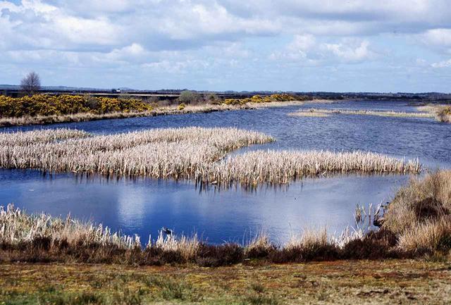 画像: 湿った硬いスポンジのような「ボグ」の広がるピートの荒れ地。アイルランド島のおよそ6分の1を占める
