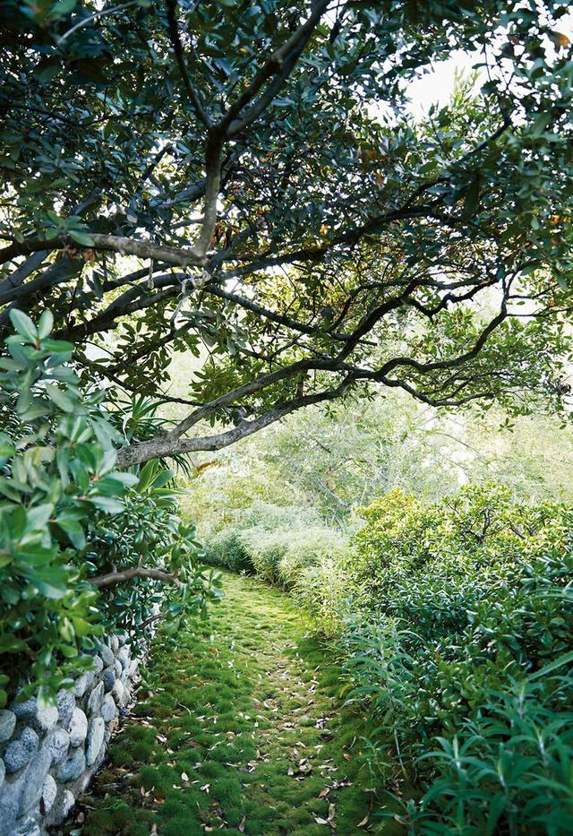 画像: 日本式のシバ草が生えた小道の上に覆いかぶさるように日陰をつくるアカシアの木。この小道は、サルビア、縁紅弁慶、アロエが生えている庭の中を通っている
