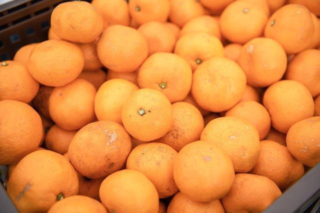画像: ファーマーズ・マーケットのブースに並ぶ、大谷農園の「温州みかん」。口に入れると爽やかな甘さ、みずみずしさがほとばしる
