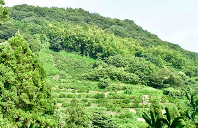 画像: みかんの段々畑には、昔の人が急な山の斜面を苦労して切り開いてきた歴史がある