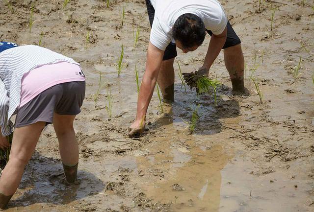 画像: みんな裸足になって手も足も泥だらけ。慣れない中腰での田植えに悪戦苦闘しつつも楽しそう