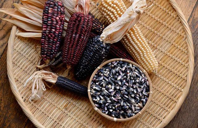 画像: メキシコ国内にトウモロコシは200種以上ある。粒になっているのがメキシコ在来種のブルーコーン。メキシコ国内で在来種のトウモロコシを守る活動をしている農家から購入