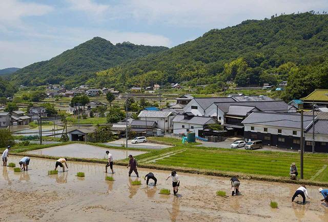 画像: 高台に位置する水田で田植え開始。チーム一丸となり、一列になって苗を植えてゆく