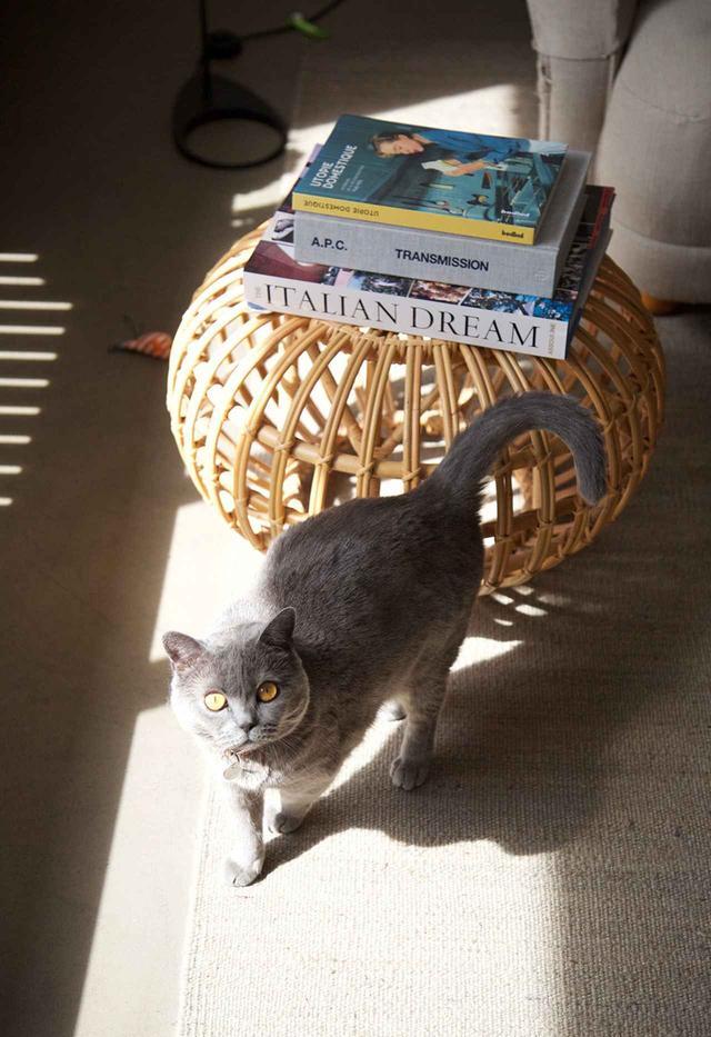 画像: ジャンの末娘が飼っている猫のインディ
