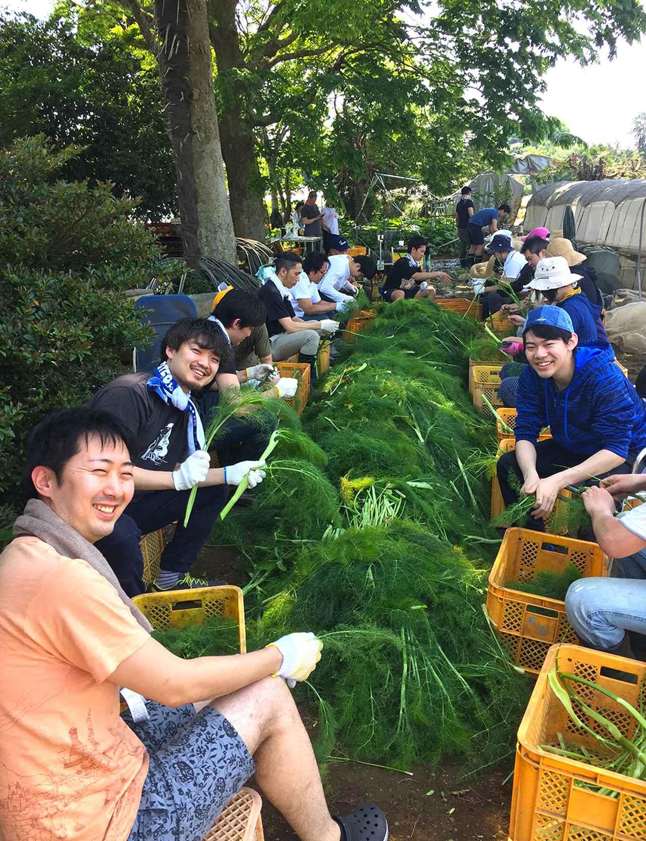 画像 : 5番目の画像 - 「「ブリコラージュ」の お皿を作るものと人<Vol.6> ――畑の中のクリエーター 「エコファームアサノ」」のアルバム - T JAPAN:The New York Times Style Magazine 公式サイト