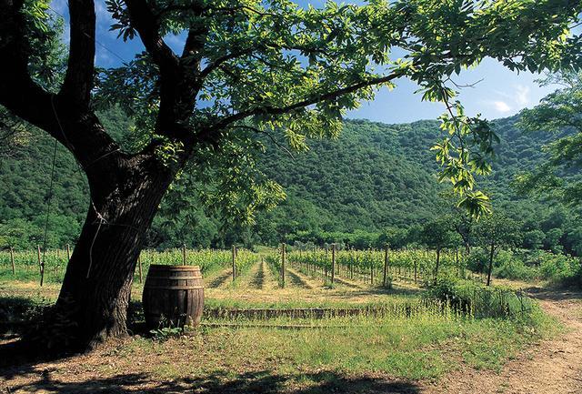 画像: 畑はすべてビオロジックで栽培。今やフランチャコルタ全体で70%がビオロジック栽培だというが、「バローネ・ピッツィ―ニ」はまさしくその先駆者だ COURTESY OF BARONE PIZZINI