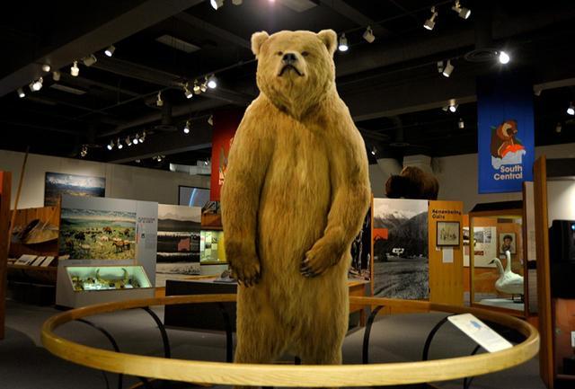 画像: グリズリーの剥製に息を呑む、アラスカ州立博物館入り口。星野道夫氏の写真はじめ自然や先住民の文化が展示されていた