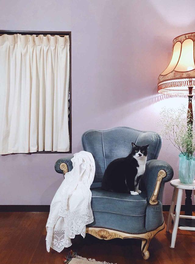 画像: ふたりが暮らす家のリビングの壁はライラック色。玉座にいるのは愛猫オスカー君 COURTESY OF SOWA