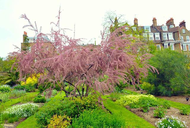 画像: 高級住宅地区の一角に歴史を誇る「チェルシー薬草園」。四季折々の珍しい花も咲き、カフェもある